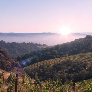Cain Vineyard – An interesting discussion on Brett in Wine.