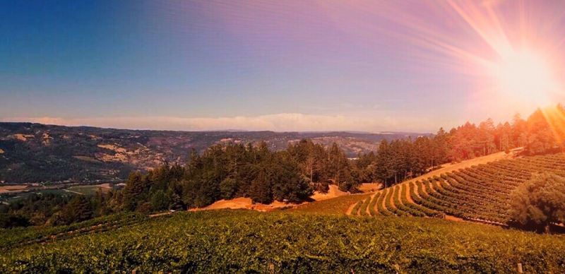 Zooming with Smith-Madrone Winery and Vineyards